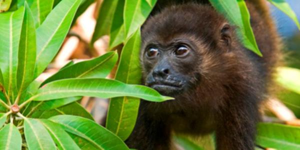 Nature Reserve Monkey