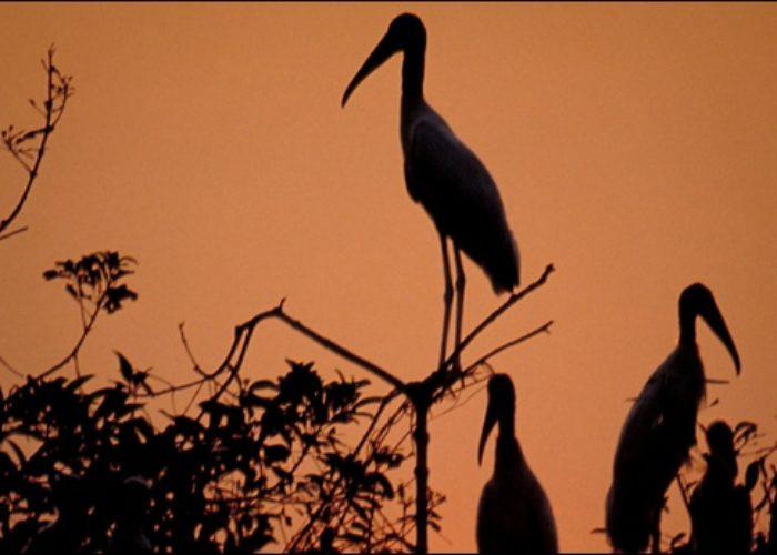 pantanal3