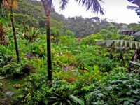 Lost Iguana Hotel